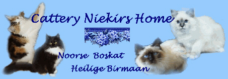 Cattery Niekirs Home