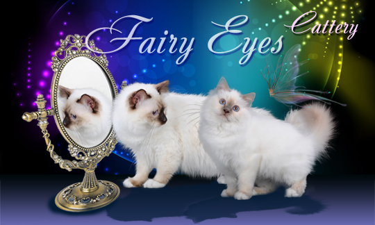 Cattery Fairy Eyes